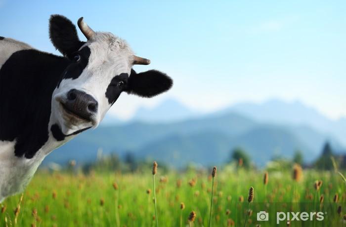Fototapeta winylowa Krowa - iStaging
