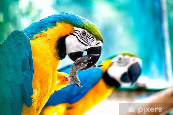 Naklejka Pixerstick Papugi ara na wolności z tropikalnej dżungli tle - Brazylia