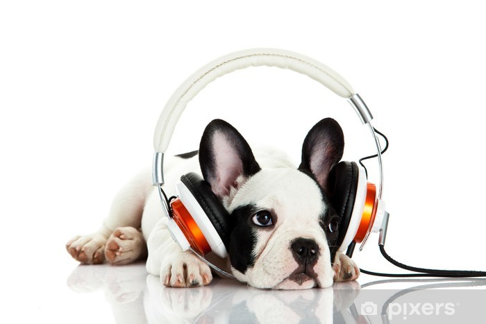 french bulldog with headphone isolated on white background Vinyl Wall Mural - Mammals