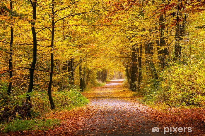 Fotomural Estándar Autumn forest - Temas