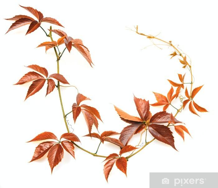Naklejka Pixerstick Jesień gałęzi na białym tle - Rośliny