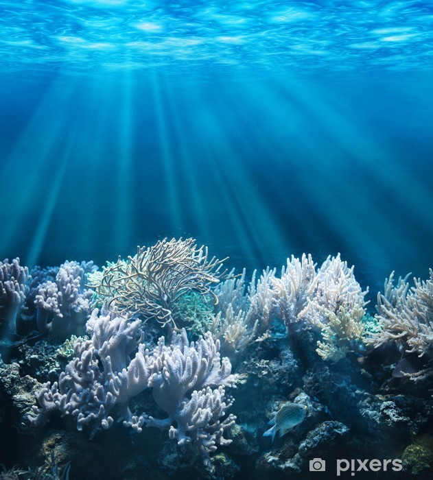 Adesivo Pixerstick Tranquil scena subacquea con copia spazio - Acqua