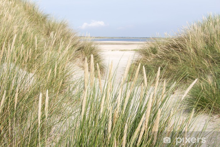 Fototapeta winylowa Piaszczyste wydmy w Holandii - Holandia