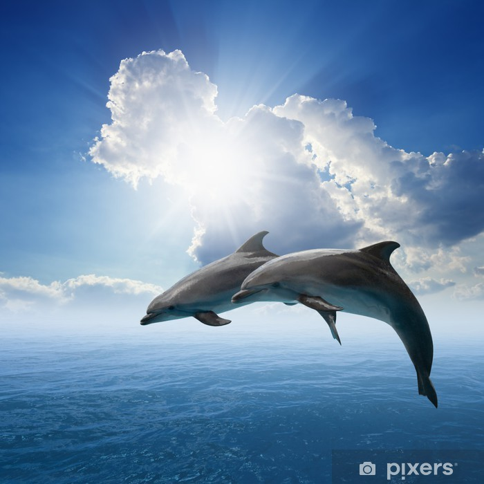 Dolphins jumping Vinyl Wall Mural - Themes