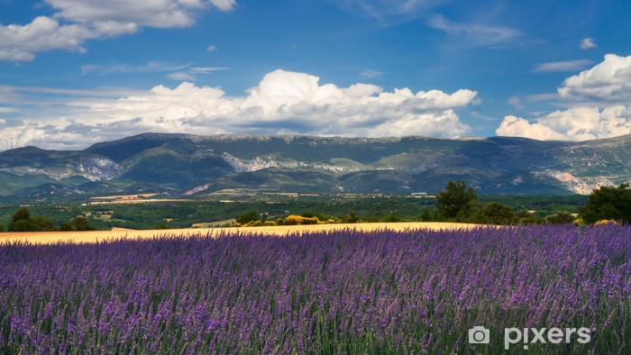 Wheat and Lavender fields Vinyl Wall Mural - Themes