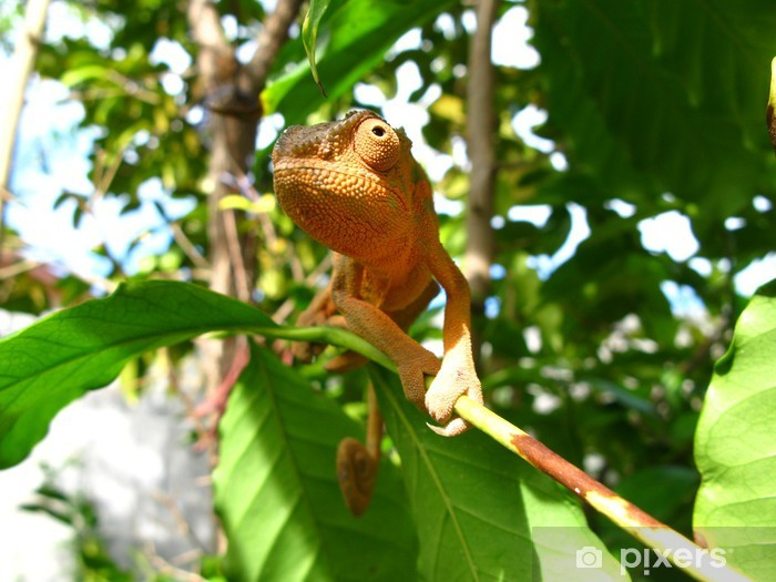Naklejka Pixerstick Kameleon - Tematy