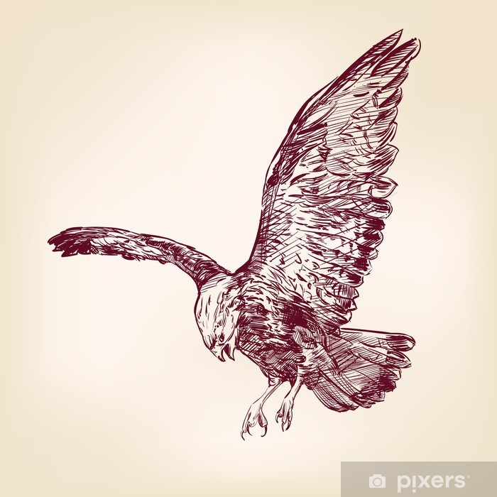 Plakat Eagle - ręcznie rysowane ilustracji wektorowych - Ptaki