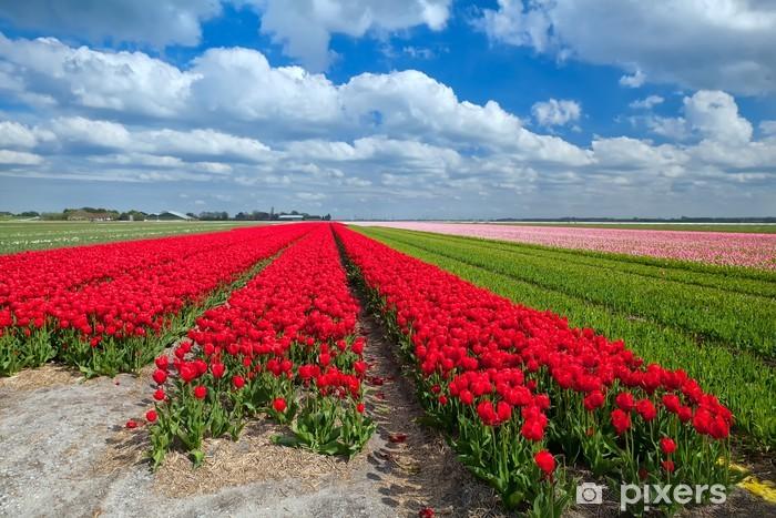Vinyl-Fototapete Rote Tulpe Felder im Frühjahr - Himmel