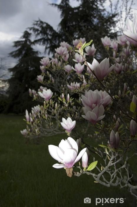 Nálepka Pixerstick Kamélie - Květiny