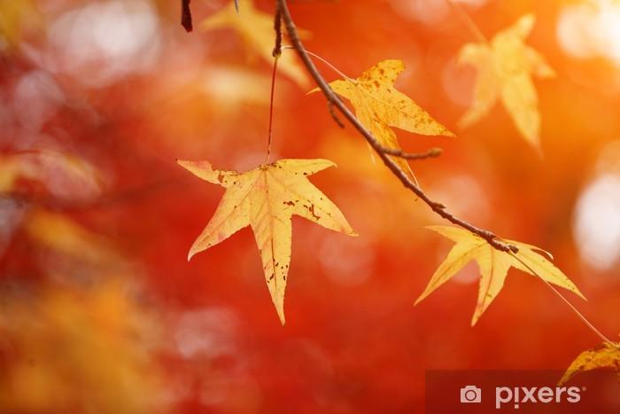 Naklejka Pixerstick Żółty jesieni pozostawia na czerwonym tle liści - Pory roku
