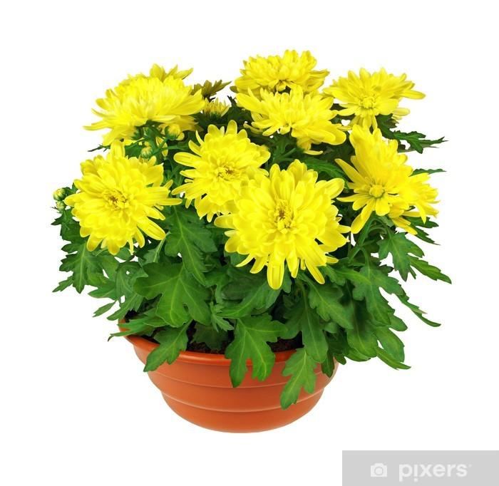 Nálepka Pixerstick Žluté chryzantémy - Domov a zahrada