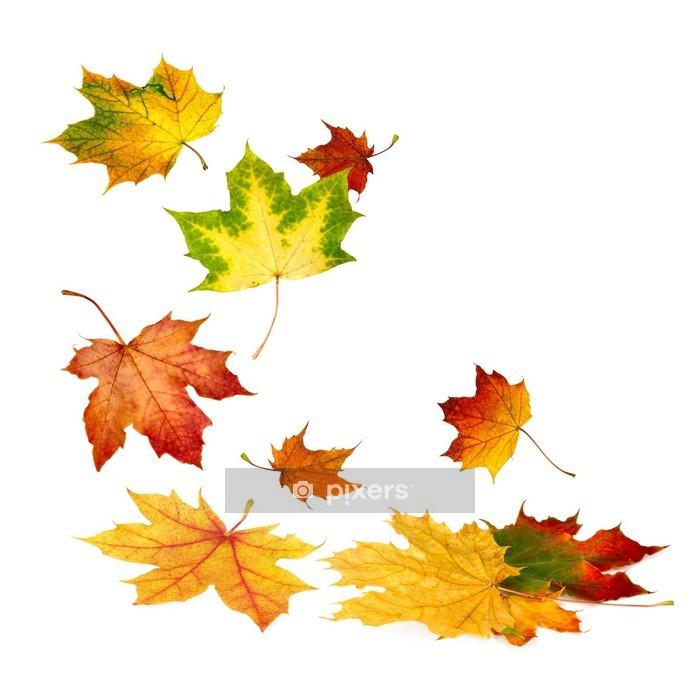 Adesivo da Parete Cadono le foglie di autunno su bianco - Panorami