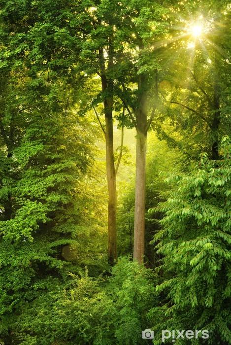 Pixerstick Sticker Gouden zon schijnt door de bomen -