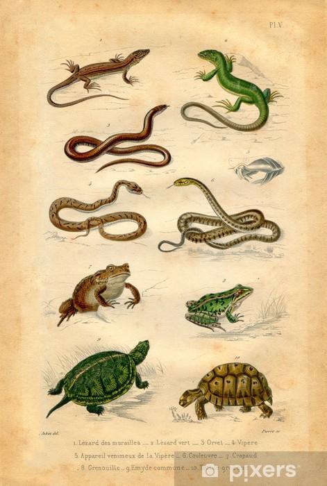 Fototapeta Natural History: gady i płazy • Pixers® - Żyjemy by ...