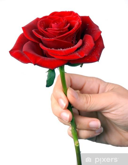 Risultati immagini per una rosa