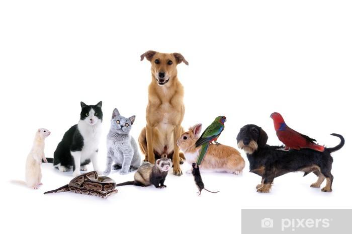 Dekor Husdjur Hund Katt Mus Pixerstick