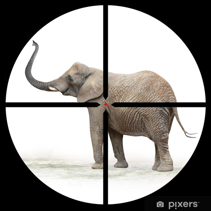 Plakát Slon africký v Hunter rozsahu. - Savci