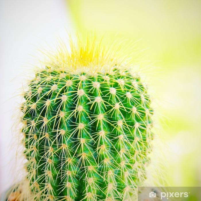 Fotomural Cactus