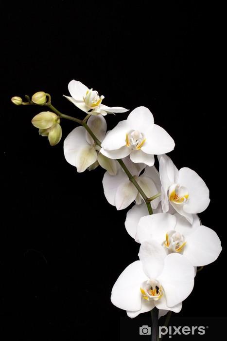 Papier peint vinyle Orchidée blanche isolé sur fond noir - Thèmes