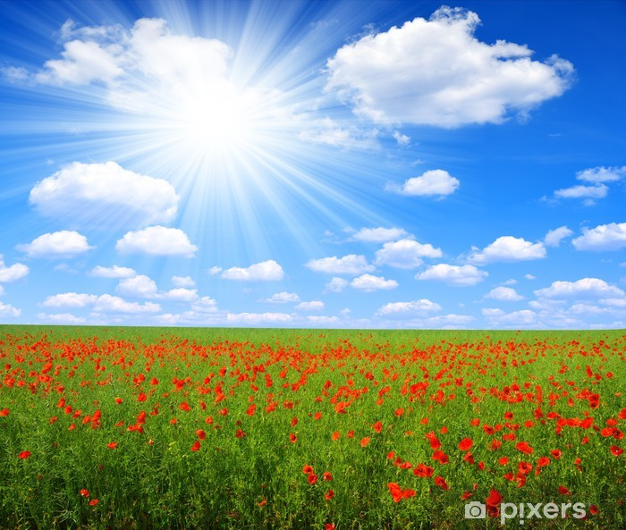 Poster Red Mohnfeld mit sonnigen Himmel - Landwirtschaft