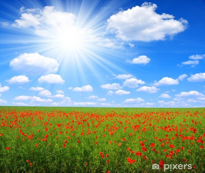 Poster Champ de coquelicots rouges avec ciel ensoleillé - Agriculture