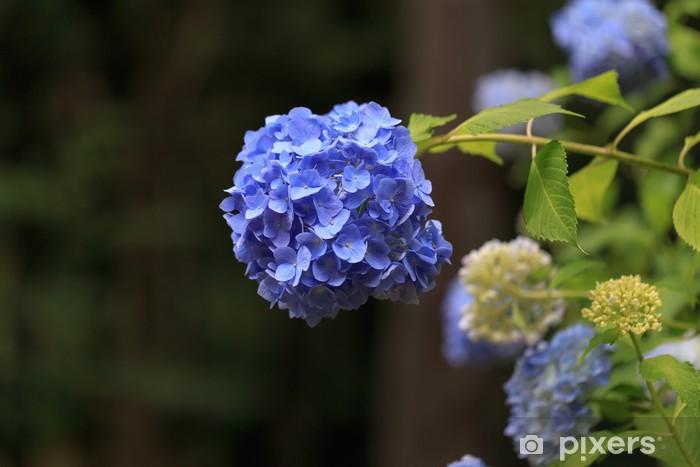 Vinyl-Fototapete Hortensie - Blumen