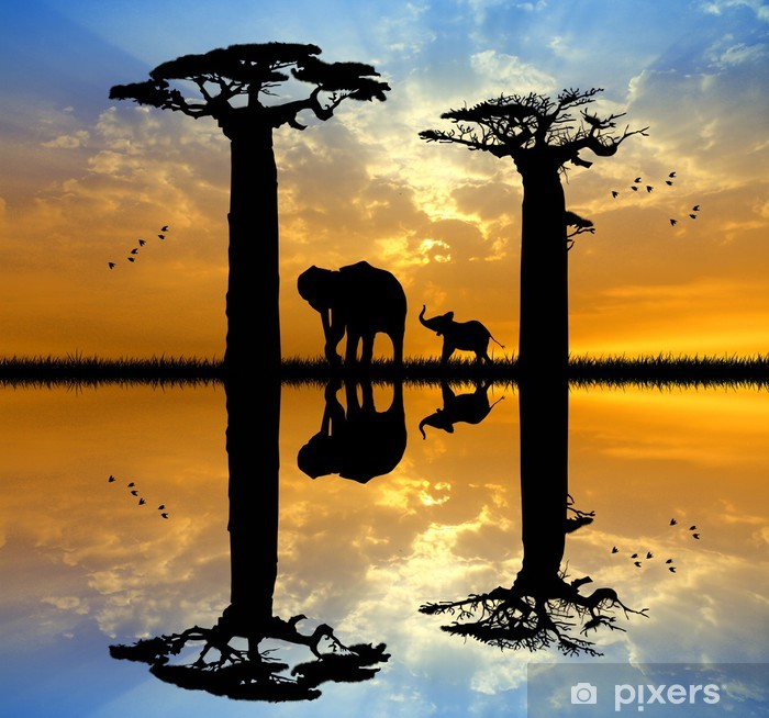 Baobab and elephant at sunset Pixerstick Sticker - Themes