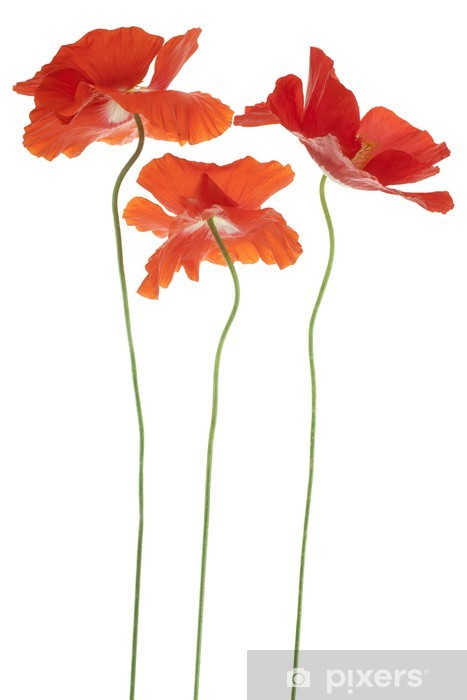 poppy Pixerstick Sticker - Flowers