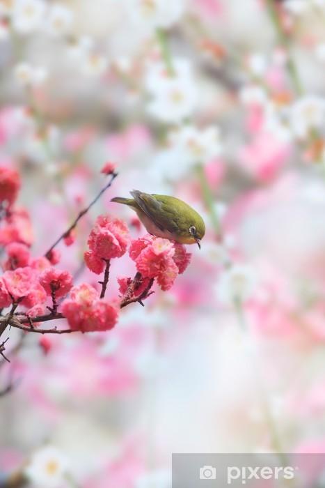 Papier peint vinyle Mejiro et prune - Oiseaux