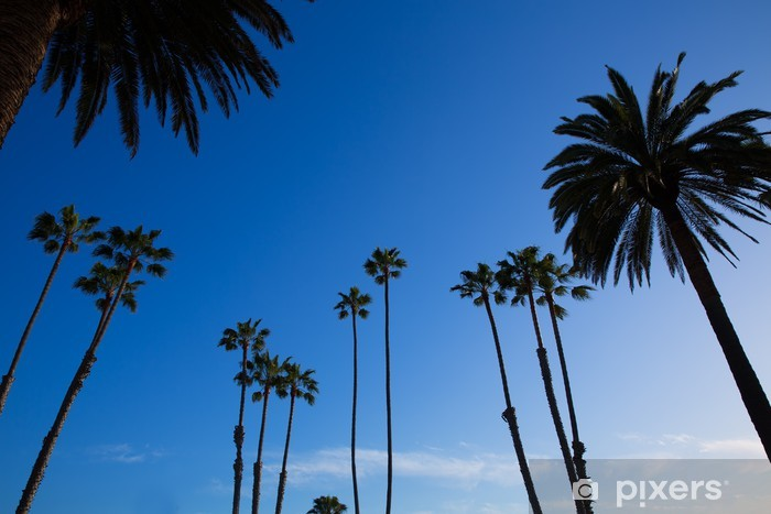 California high palm trees silohuette on blue sky Pixerstick Sticker - American Cities
