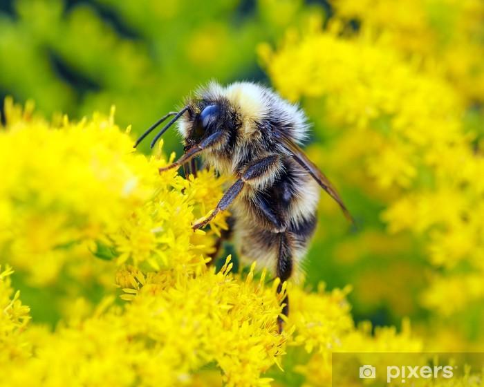 Fototapeta winylowa Pszczoła - Inne Inne