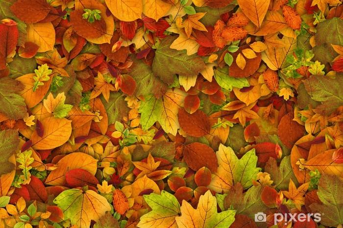 Papier peint vinyle Les feuilles d'automne comme fond d'écran - Thèmes