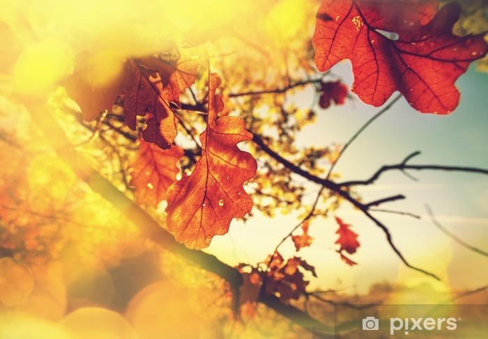 Vinyl-Fototapete Autumn leaves - Themen
