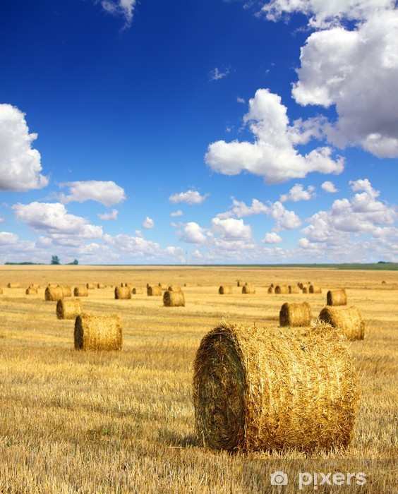 harvested bales of straw in field Pixerstick Sticker - Themes