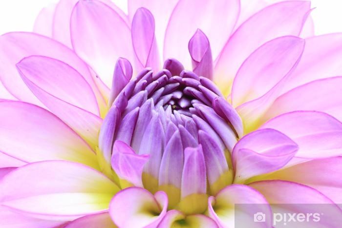 Fototapeta winylowa Dalia - Kwiaty
