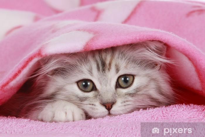 Papier peint vinyle Chaton à la recherche de sous couverture - chat se cache sous la couverture - Thèmes