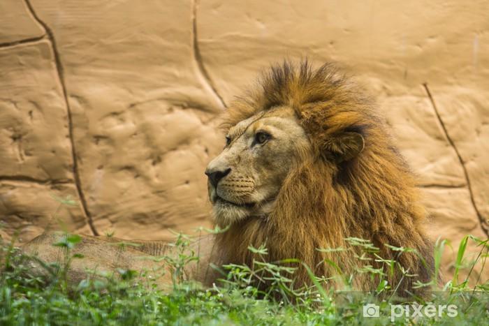 119ecb2692df9 Papier peint Le roi lion • Pixers® - Nous vivons pour changer