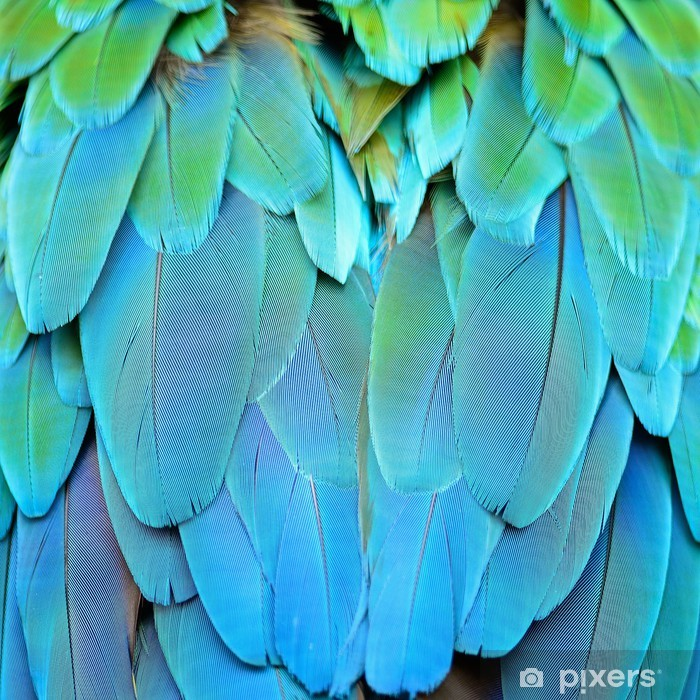 Sticker Pixerstick Harlequin ara plumes - Thèmes
