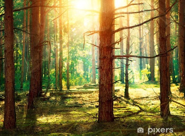 Pixerstick Sticker Forest - Thema's