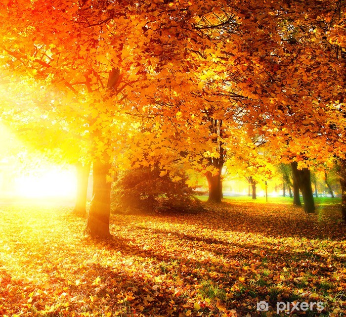 Papier peint vinyle Automne. Parc d'automne. Les arbres d'automne et feuilles dans les rayons du soleil - Thèmes