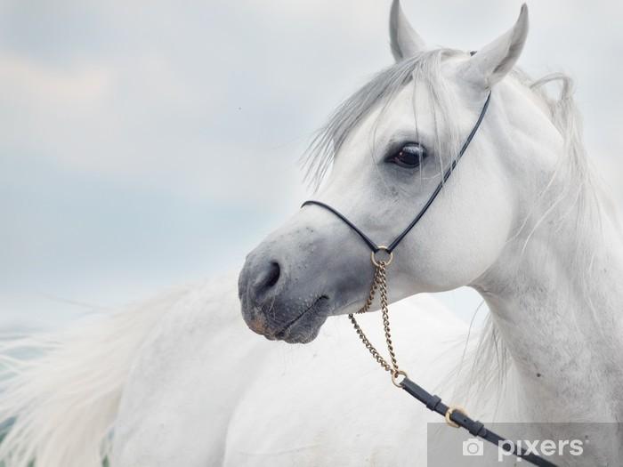 Sticker Pixerstick Portrait doux de blanc magnifique étalon arabe à ciel Fond - Thèmes