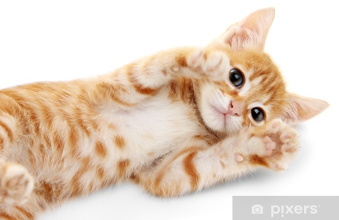 Ongekend Fotobehang Leuke kleine rode kitten geïsoleerd op wit • Pixers NN-34