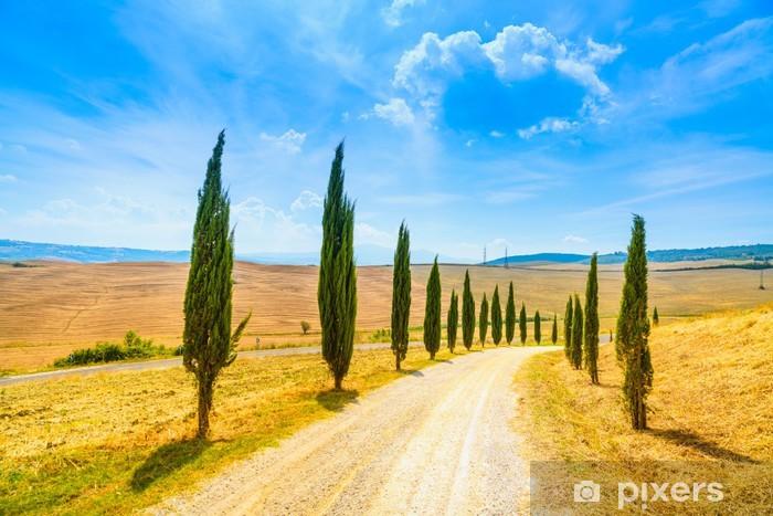 Papier peint vinyle Toscane, Cyprès paysage rural de la route blanche, Italie, Europe - Thèmes