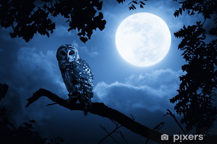 Owl Illuminated By Full Moon On Halloween Night Self-Adhesive Wall Mural -