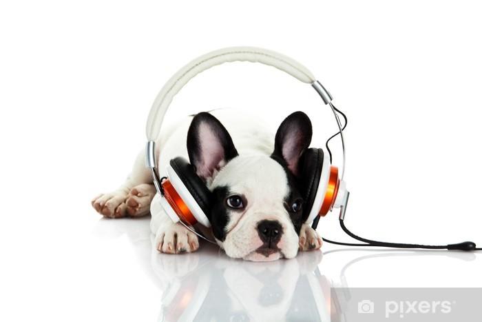 Fotomural Estándar Bulldog francés con auriculares aislados en fondo blanco - iStaging