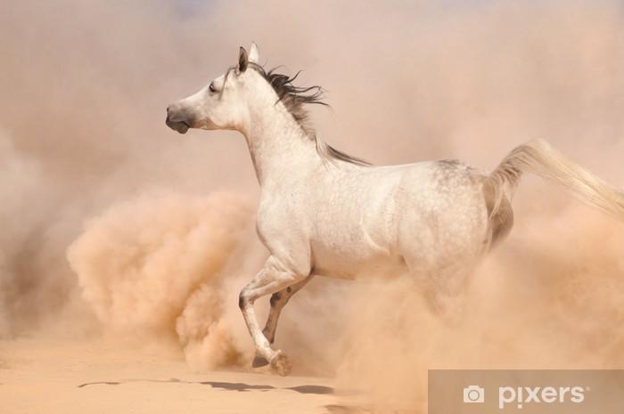 Purebred white arabian horse running in desert Vinyl Wall Mural - Deserts