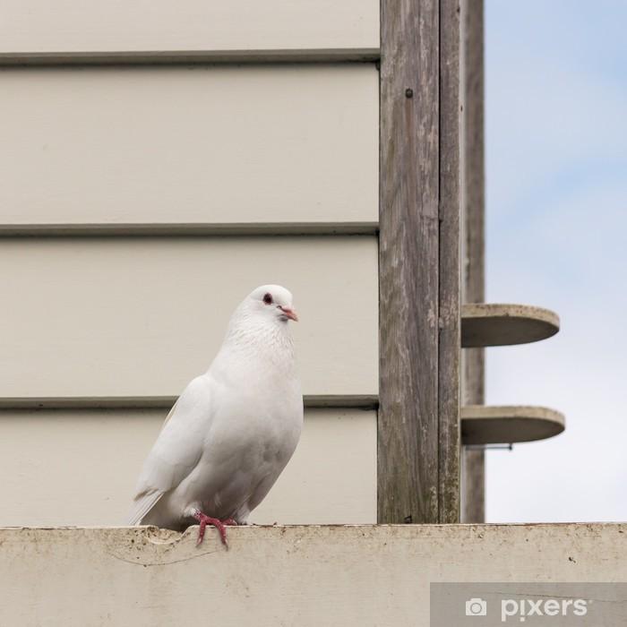 Sticker Pixerstick Pigeon blanc, assis au pigeonnier - Oiseaux