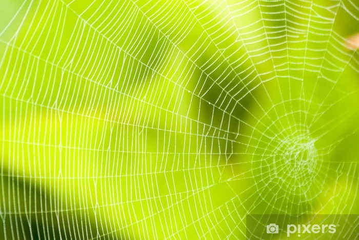 Vinylová fototapeta Pavučina vzor pro halloween strašidelné pavoučí - Vinylová fototapeta