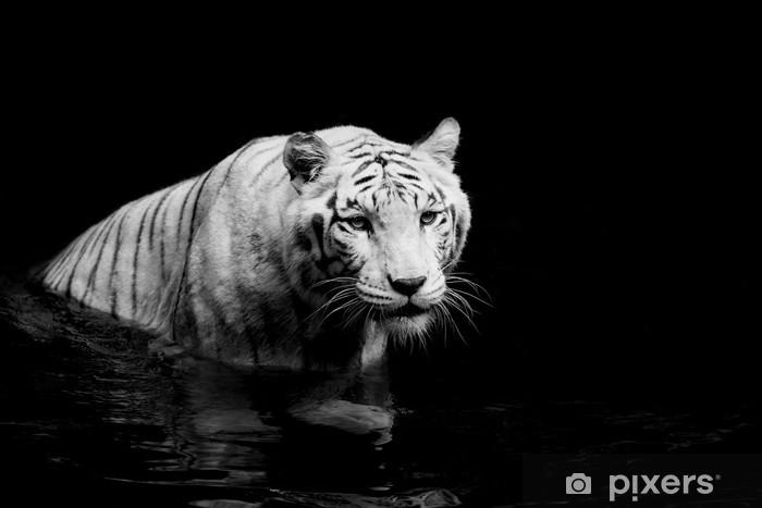 Naklejka Pixerstick Biały tygrys -