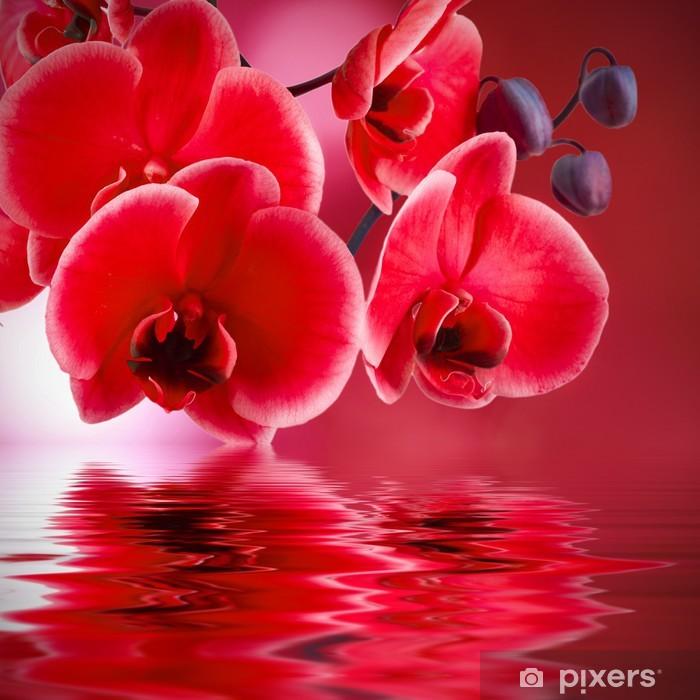 Sticker Pixerstick Orchidées rouges avec le fond et l'eau - Styles